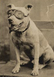 Bud in Goggles