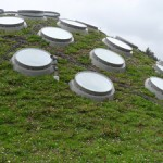 Renzo's Green Roof