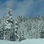 Snowstorm at Mount Hood