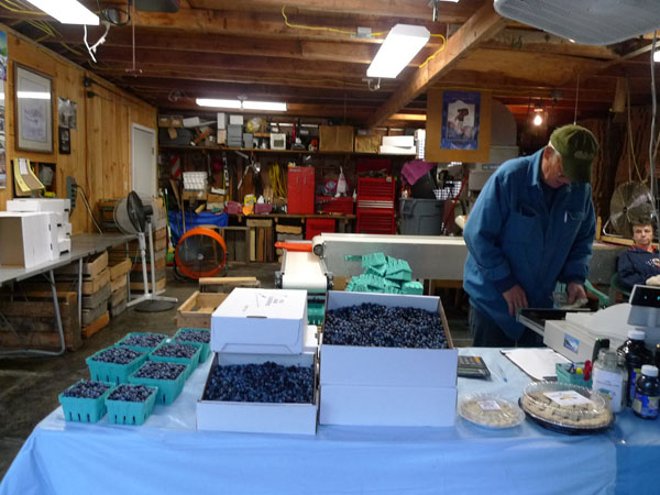 Various quantities of blueberries for sale