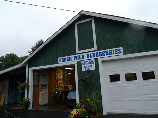 Blueberries for sale south of Ellsworth