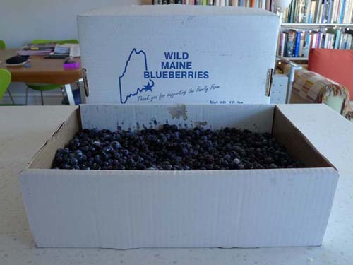 Box of Blueberries at home