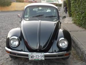 a black bug in Puebla